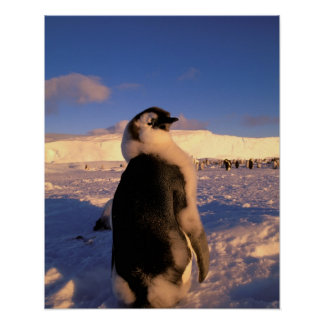 Antarctica, Australian Antarctic Territory, 2 Poster