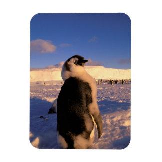 Antarctica, Australian Antarctic Territory, 2 Rectangular Photo Magnet