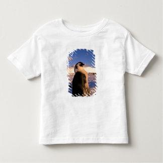 Antarctica, Australian Antarctic Territory, 2 Toddler T-shirt
