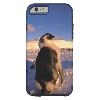 Antarctica, Australian Antarctic Territory, 2 Tough iPhone 6 Case
