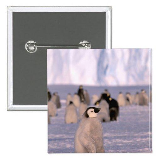 Antarctica, Australian Antarctic Territory, 3 2 Inch Square Button
