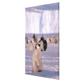 Antarctica, Australian Antarctic Territory, 3 Canvas Print