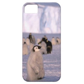 Antarctica, Australian Antarctic Territory, 3 iPhone SE/5/5s Case