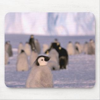 Antarctica, Australian Antarctic Territory, 3 Mouse Pad