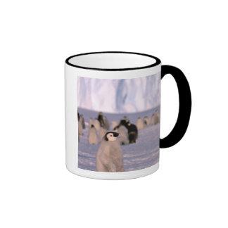 Antarctica, Australian Antarctic Territory, 3 Mug