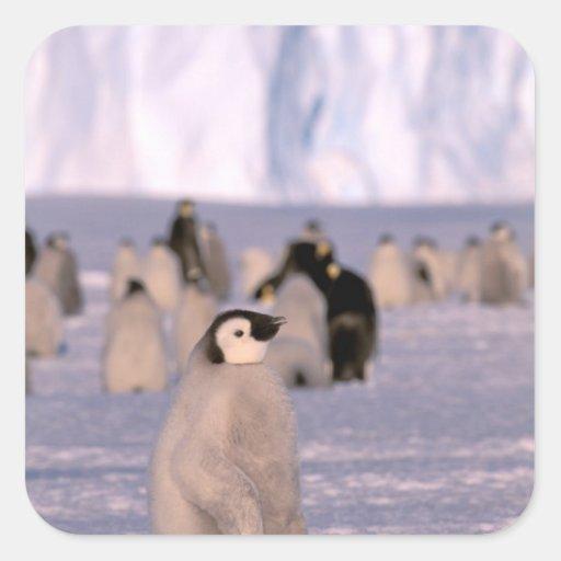 Antarctica, Australian Antarctic Territory, 3 Square Stickers