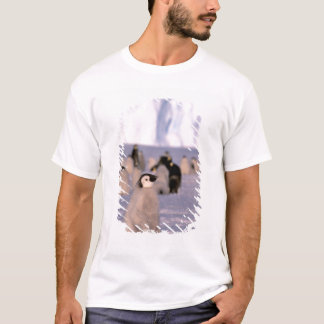 Antarctica, Australian Antarctic Territory, 3 T-Shirt