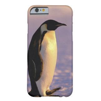 Antarctica, Australian Antarctic Territory, 4 Barely There iPhone 6 Case