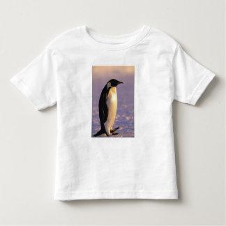 Antarctica, Australian Antarctic Territory, 4 Toddler T-shirt