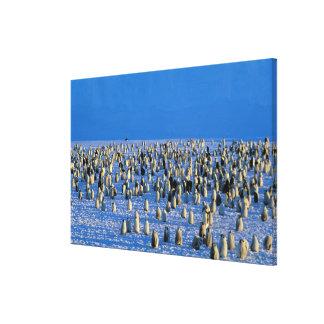 Antarctica, Australian Antarctic Territory, 5 Canvas Print