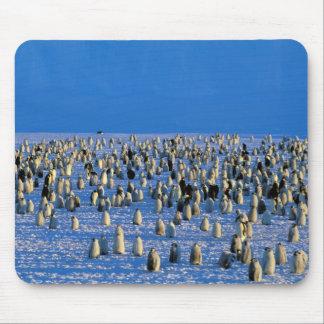 Antarctica, Australian Antarctic Territory, 5 Mouse Pad