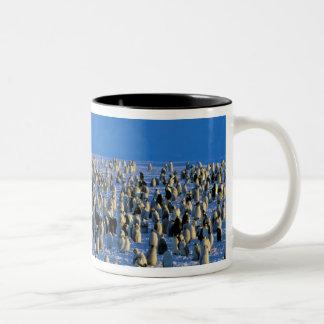 Antarctica, Australian Antarctic Territory, 5 Two-Tone Coffee Mug