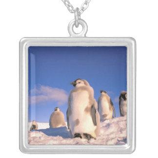 Antarctica, Australian Antarctic Territory, 6 Silver Plated Necklace