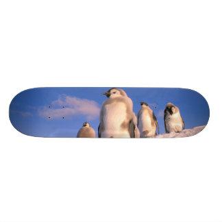 Antarctica, Australian Antarctic Territory, 6 Skateboard Deck