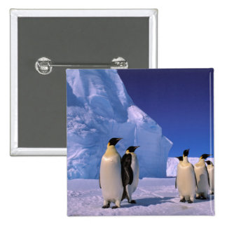 Antarctica, Australian Antarctic Territory, 7 2 Inch Square Button