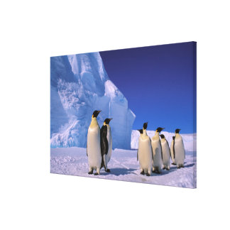 Antarctica, Australian Antarctic Territory, 7 Canvas Print