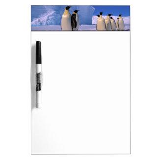 Antarctica, Australian Antarctic Territory, 7 Dry-Erase Board