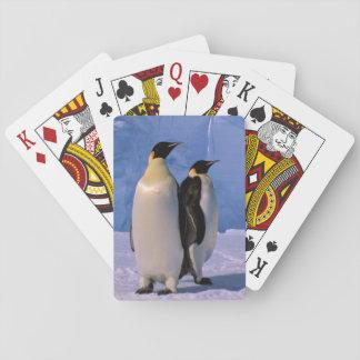 Antarctica, Australian Antarctic Territory, 7 Playing Cards