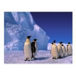 Antarctica, Australian Antarctic Territory, 7 Post Cards