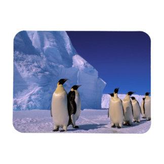 Antarctica, Australian Antarctic Territory, 7 Rectangular Photo Magnet