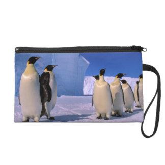 Antarctica, Australian Antarctic Territory, 7 Wristlet