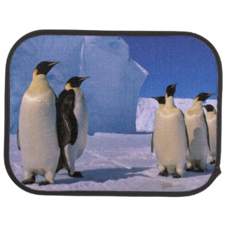 Antarctica, Australian Antarctic Territory, 7 Car Mat