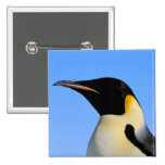 Antarctica, Australian Antarctic Territory, 8 2 Inch Square Button