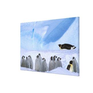 Antarctica, Australian Antarctic Territory, Cape Canvas Print