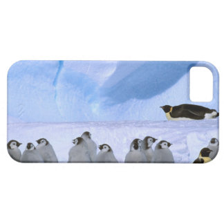 Antarctica, Australian Antarctic Territory, Cape iPhone SE/5/5s Case