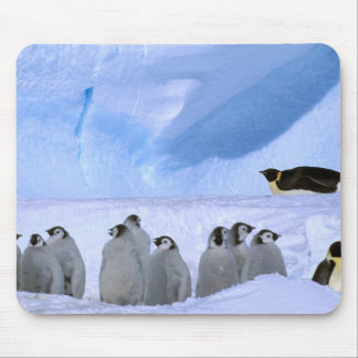Antarctica, Australian Antarctic Territory, Cape Mouse Pad