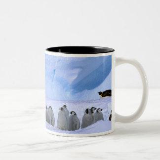 Antarctica, Australian Antarctic Territory, Cape Two-Tone Coffee Mug