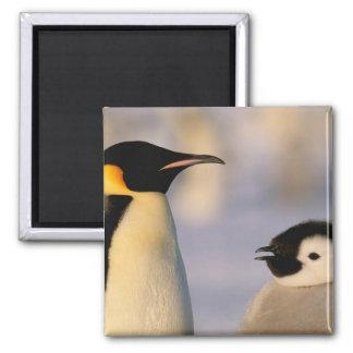 Antarctica, Australian Antarctic Territory, 2 Inch Square Magnet