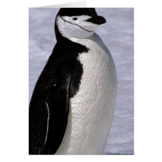Antarctica. Chinstrap penguin 2 Card