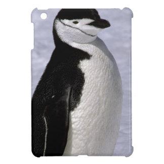 Antarctica. Chinstrap penguin 2 iPad Mini Cover