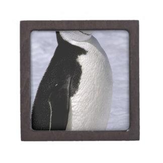 Antarctica. Chinstrap penguin 2 Premium Keepsake Boxes