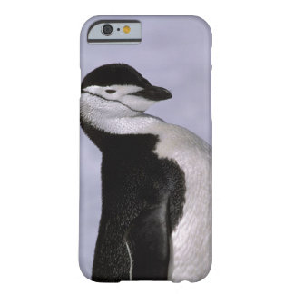 Antarctica. Chinstrap penguin Barely There iPhone 6 Case