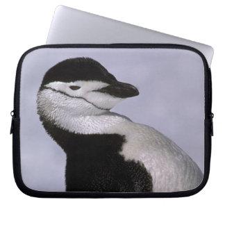 Antarctica. Chinstrap penguin Computer Sleeve
