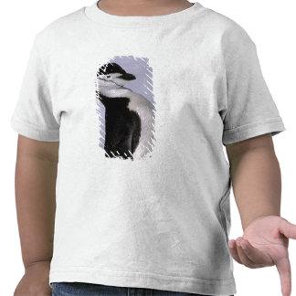 Antarctica. Chinstrap penguin Tshirt
