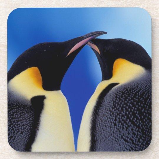 Antarctica, Emperor Penguin (Aptenodytes 2 Drink Coaster