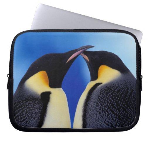 Antarctica, Emperor Penguin (Aptenodytes 2 Laptop Computer Sleeve