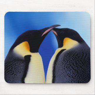 Antarctica, Emperor Penguin (Aptenodytes 2 Mouse Pad