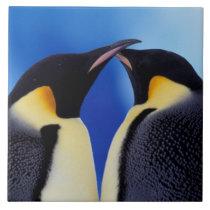Antarctica, Emperor Penguin (Aptenodytes 2 Tile