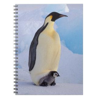 Antarctica, Emperor Penguin (Aptenodytes Spiral Note Book