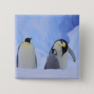 Antarctica. Emperor penguins and chick Button