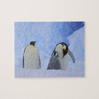 Antarctica. Emperor penguins and chick Jigsaw Puzzle