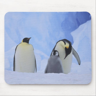 Antarctica. Emperor penguins and chick Mouse Pad