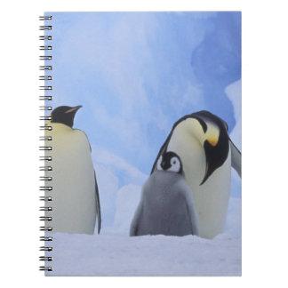 Antarctica. Emperor penguins and chick Spiral Notebook