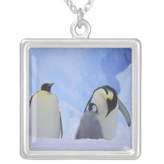 Antarctica. Emperor penguins and chick Silver Plated Necklace