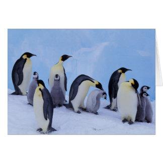 Antarctica, Emporer Penguin ((Aptenodytes Card
