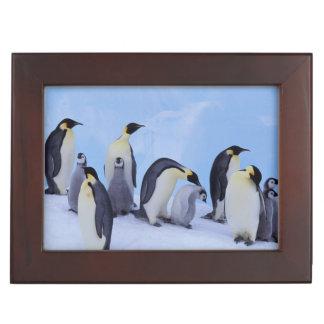 Antarctica, Emporer Penguin ((Aptenodytes Memory Box